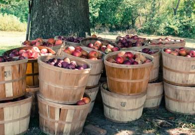 Come coltivare alberi da frutto in giardino