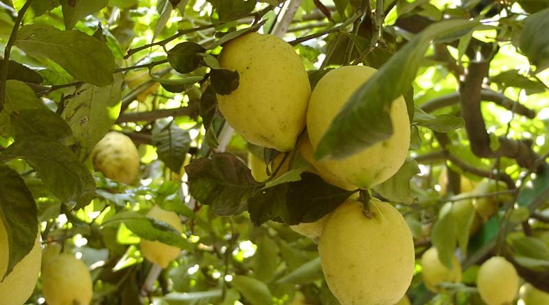 proprietà del limone