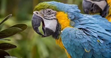 pastoncino per pappagallo