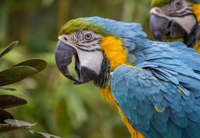 Miscele per pappagalli a base di pastoncini ed elementi naturali