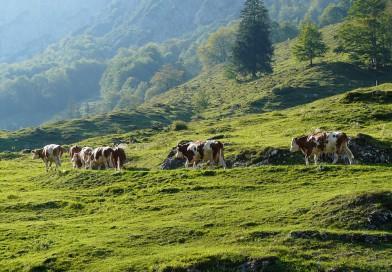 Progetto della transumanza sull'Appennino emiliano, per conoscere da vicino la vita dei pastori