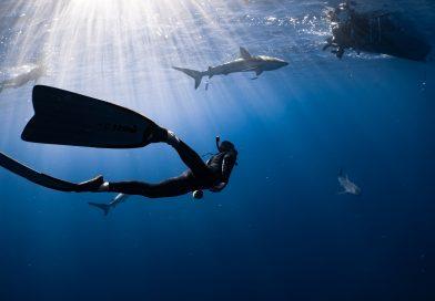 Un tuffo nel blu: le immersioni subacquee